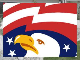 Bald Eagle Image